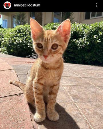 kedi-sahiplendirme-60e449f9068dc.jpg