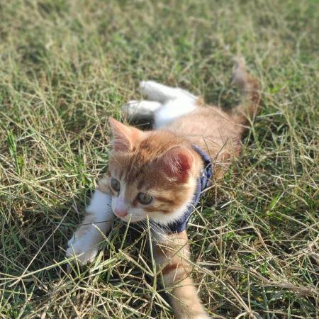 kedi-sahiplendirme.jpg