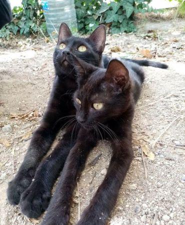 kedi-sahiplendirme-60fc472247eff.jpg