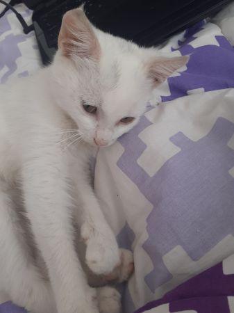 kedi-sahiplendirme-2.jpg